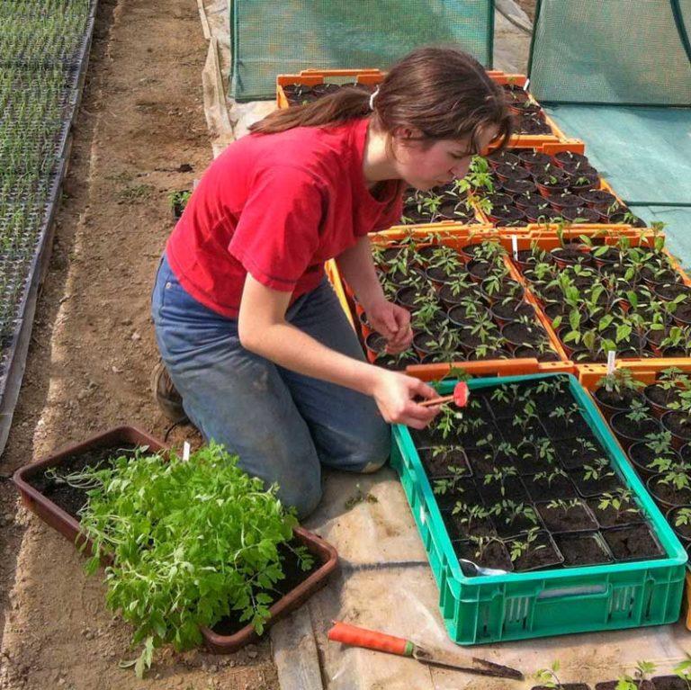 Anna-Maria beim Jungpflanzen-Vorziehen